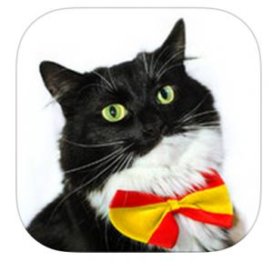 Cat-Spanish